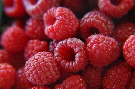 can dogs eat raspberries top 10 what fruits can dogs eat petguide