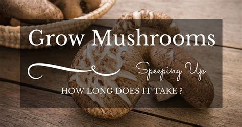how long does it take to grow a pixie into a bob how long does it take to grow mushrooms speeding up the