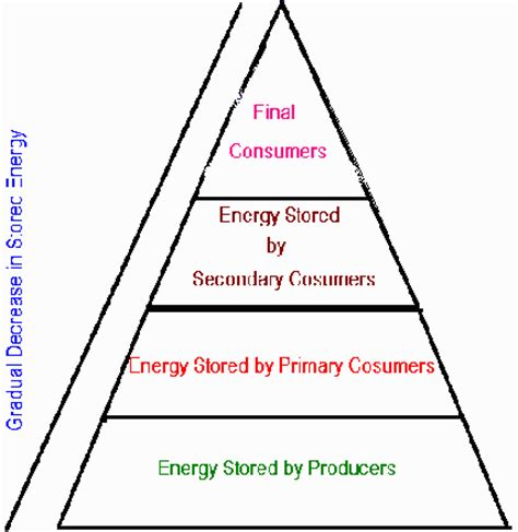 define web celebrity food chain pyramid worksheet celebrity gossip