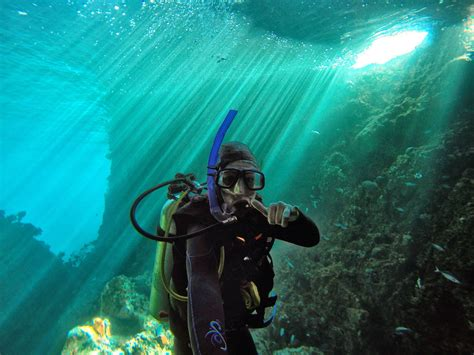 dive places 11 places to scuba dive in new zealand backpacker guide