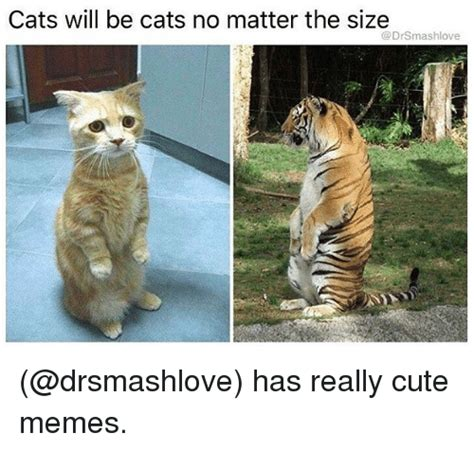 Cute No Meme - cats will be cats no matter the size has really cute memes