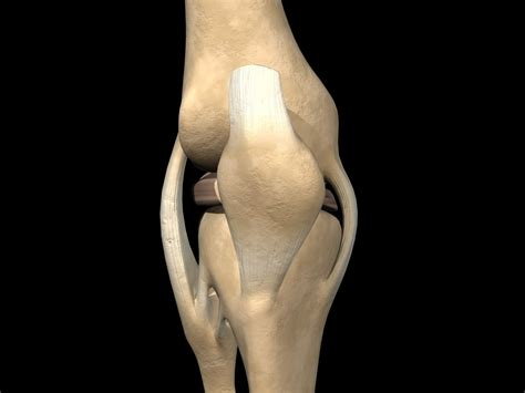 inner tear mcl tear or medial collateral ligament injuries