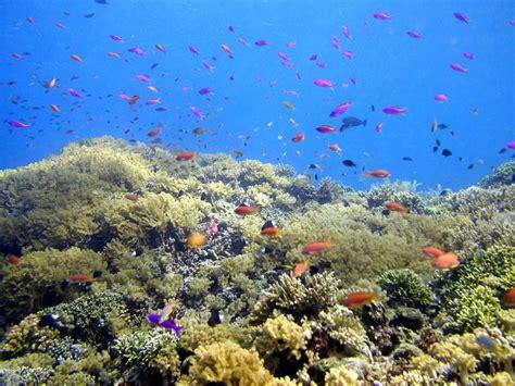 wallpaper kerang bintang laut cerita liburan dibuang sayang 2 pulau bunaken tidak