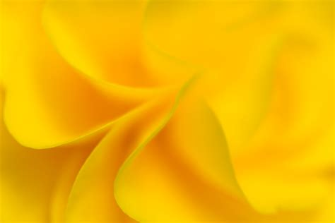 yellow flower background  stock photo iso republic