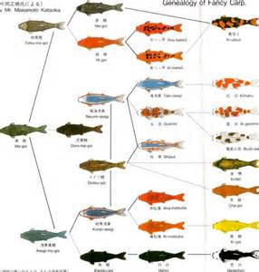 koi fish color meaning chart table of contents standard grade koi koi sales fish for