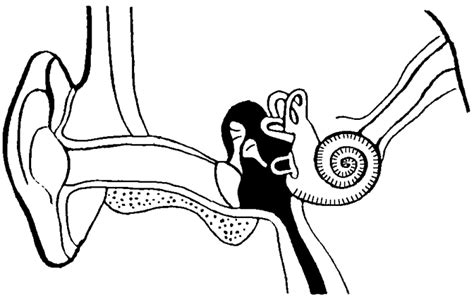 ear diagram coloring page eye and ear structures