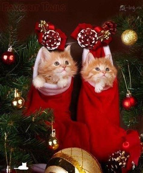 images of merry christmas kittens 1000 images about christmas kitties on pinterest