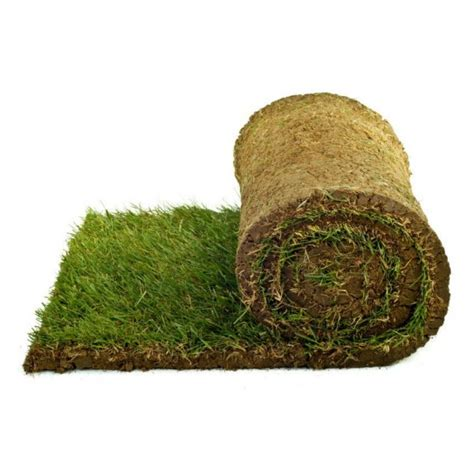 10 square meters 10 square meters of lawn that is ready in rolls prato erboso