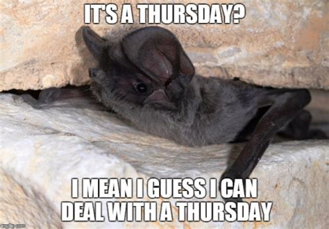 Bat Meme - bat meme 28 images 12 hilarious bat memes 27 most