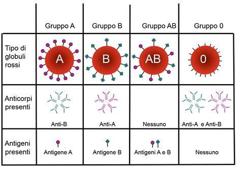gruppo sanguigno b positivo alimentazione gruppi sanguigni superagatoide