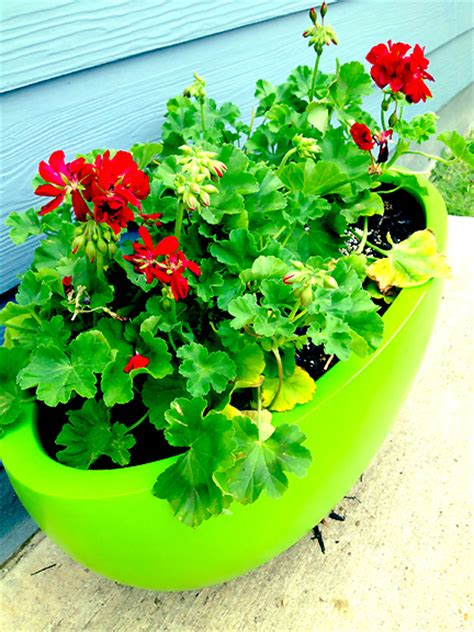 Home Goods Planters by Patio Perfection Interior Design By Room Fu Knockout Interiors