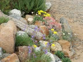 Rock Garden Nursery Plant Nursery For San Diego Los Angeles And The Rest Of Southern California