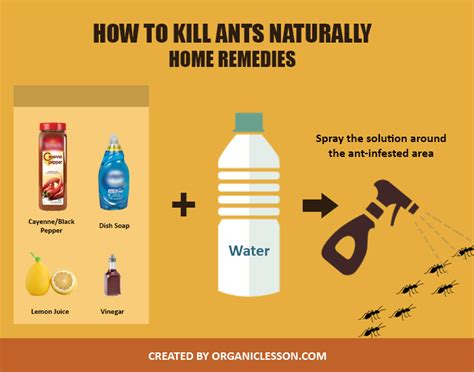 5 effective ways to instantly kill ants
