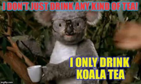 Koala Meme Generator - i am koala fried imgflip
