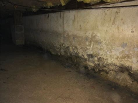 buying a house with mold in basement buying a house with mold in basement 28 images basement waterproofing foundation