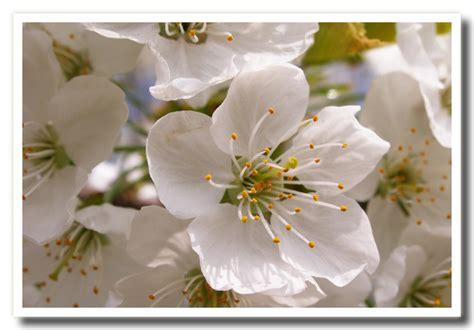 fotografie di fiori primavera fiori di primavera