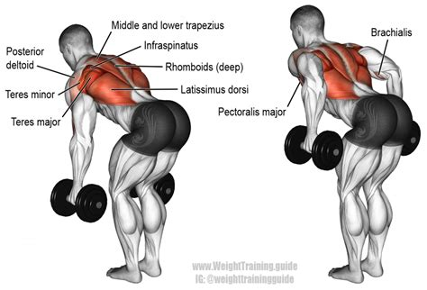 bent two arm dumbbell row exercise and