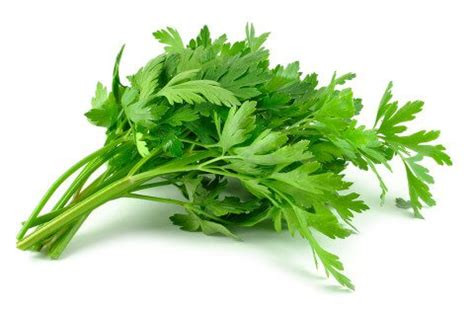 Sho Caviar Memanjangkan Rambut parsley 1 pack 100 g food glorious food