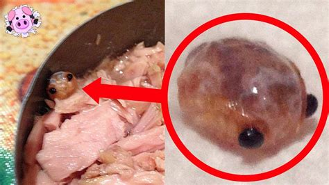 most popular things for 10 most disgusting things found in food