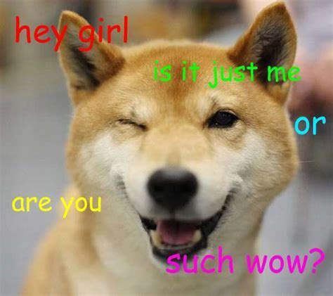 Shiba Inu Meme - 25 shiba inus so wow much cute meme collection