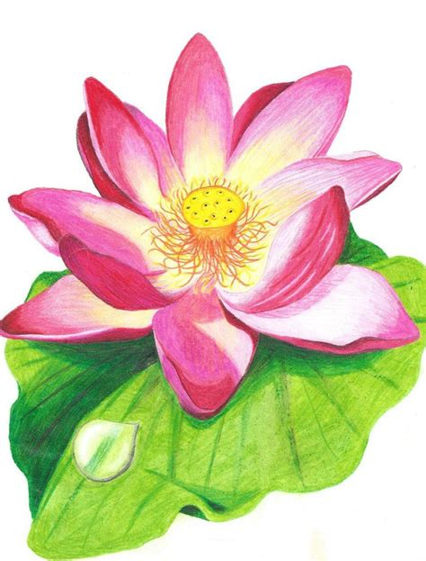 lotus colors lotus flower with crayons coloring designs in 2019