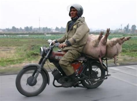 insolite deux roues   demi porc moto magazine