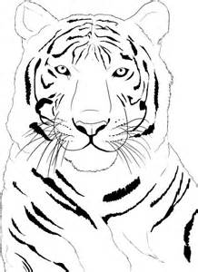 color tiger free printable tiger coloring pages for