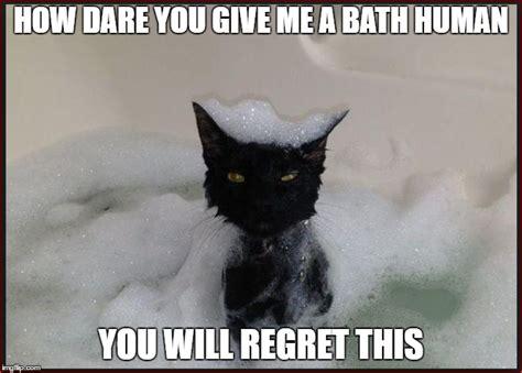 Wet Cat Meme - angry wet cat imgflip