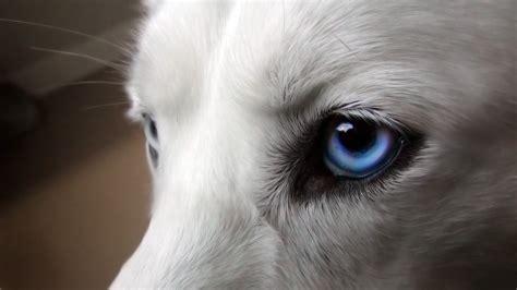 puppy eye wallpaper animal desktop wallpaper 187 animals 187 goodwp