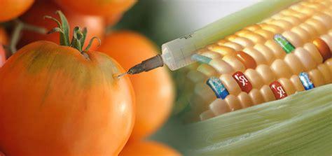 definicion de alimentos transgenicos alimentos transg 233 nicos historia definici 243 n y ventajas