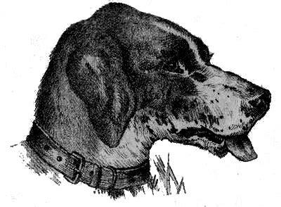 imagenes de doble sentido en blanco y negro 191 d 243 nde est 225 el due 241 o del perro im 224 genes pinterest
