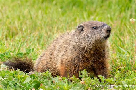 groundhog day zen groundhog day reference 28 images vero happy groundhog