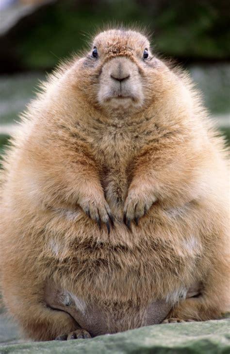 groundhog day instrumental frugal poet s guide to punxsutawney phil groundhog