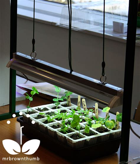 starting seeds indoors lights grow lights for indoor seed starting mrbrownthumb