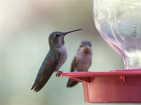 where is the best place to hang a hummingbird feeder