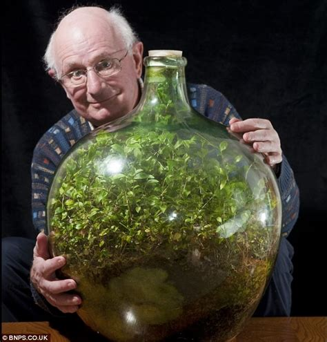Sealed Bottle Garden | the sealed bottle garden still thriving after 40 years