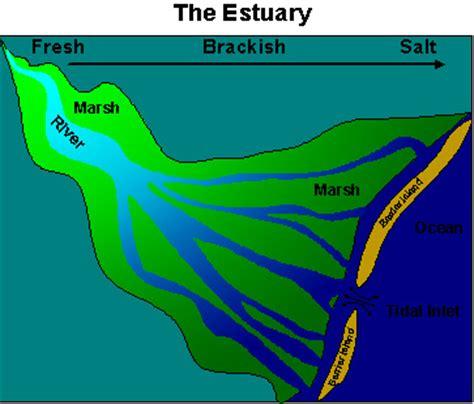 River Estuary Diagram