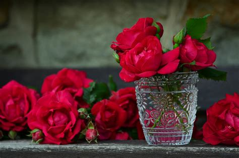 Pictures Of Roses In Vases by Bouquet Of Roses Vase Free Stock Photo