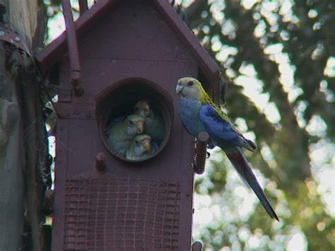 Building A Small House In The Backyard Parrots Birds In Backyards