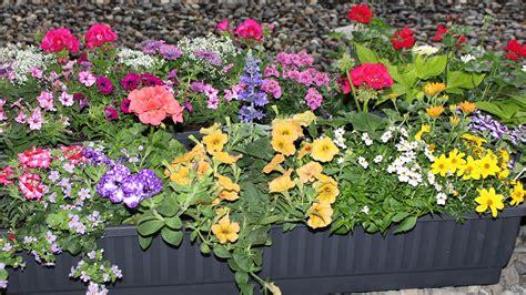 balkonpflanzen sonnig gartentipp balkonpflanzen tipps swr4 baden