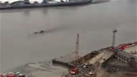 london thames monster creature in thames has the loch ness monster moved to