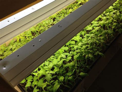 shop lights for seed starting harvester lights and heat for seed starting grow