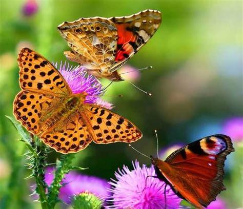fare il giardino come fare un giardino per le farfalle terra nuova
