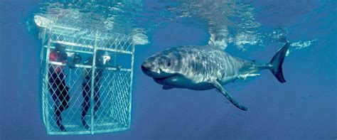 dive with sharks in south africa fly fighter jets more shark cage diving cape town kruger park vic falls