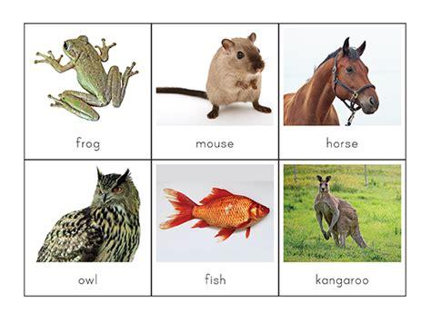 printable animal sorting cards vertebrates vs invertebrates picture sorting cards gift