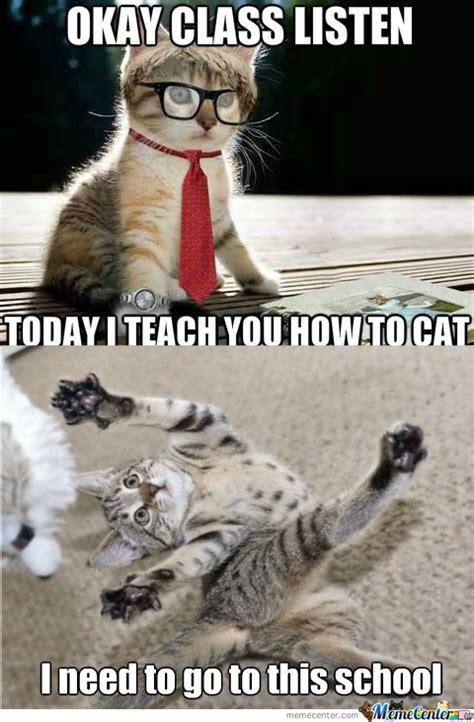 rmx teacher cat  muromies meme center