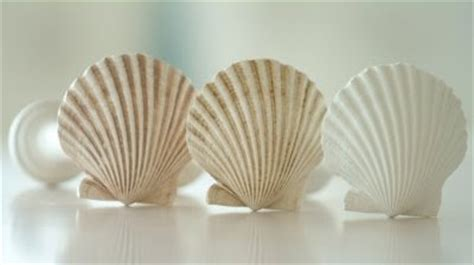seashell curtain rods seashell inspired window treatments completely coastal