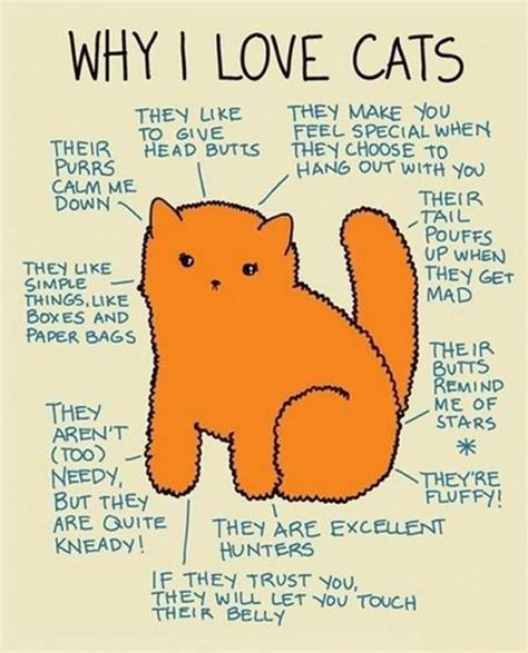 8 Reasons Why Cats Are Like Children by Why I Cats Cats Fan 37993806 Fanpop