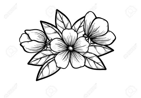 design noir meaning dessin fleur noir et blanc coloriage download