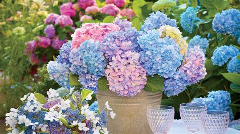 how to keep cut hydrangeas from wilting southern living
